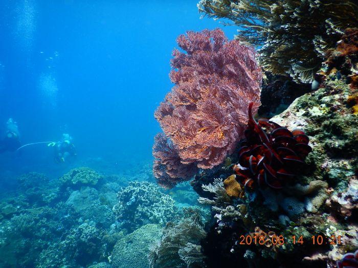 5 Tempat Snorkeling Terbaik di Banyuwangi